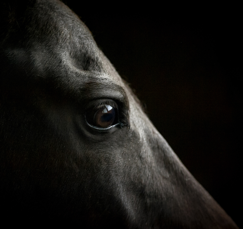 horse eye closeup on dark background - Image