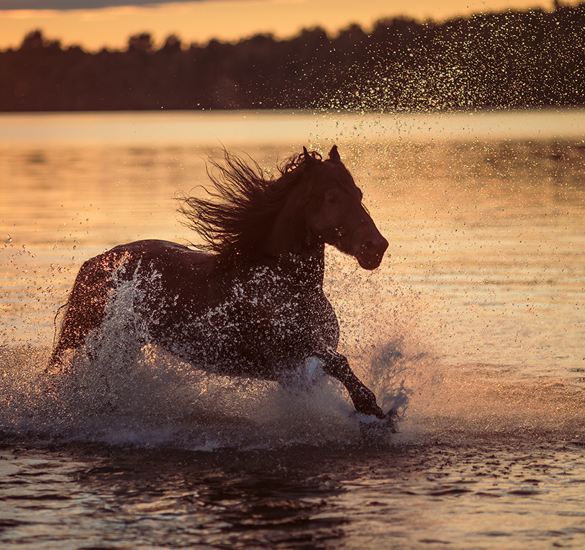 Galloping horse on the water - Image